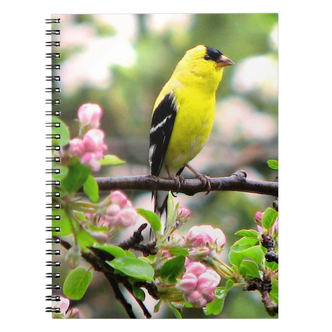 Pink Flowers and Yellow Goldfinch Bird