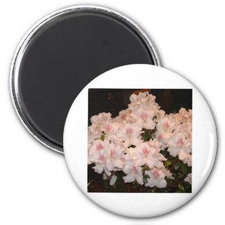Pink Flowers, Azalias 2 Inch Round Magnet