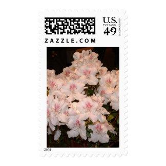 Pink Flowers, Azalias Stamps
