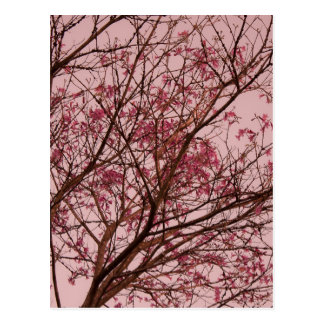 Pink Flowers Branch Postcard