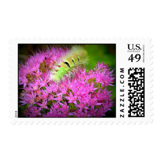 pink flowers caterpillar postage stamps