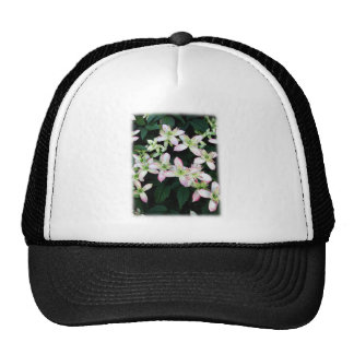 Pink flowers. Clematis. On White. Hats