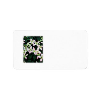 Pink flowers Clematis On White Custom Address Labels