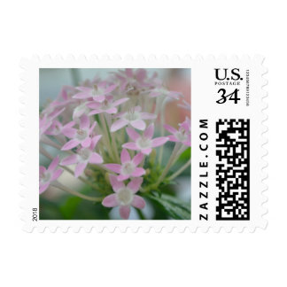 Pink Flowers Cluster Photo Print Postage