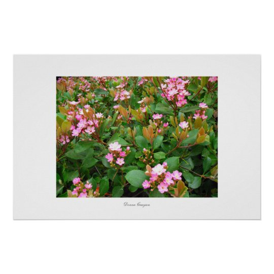 pink flowers, green leaves Poster and print