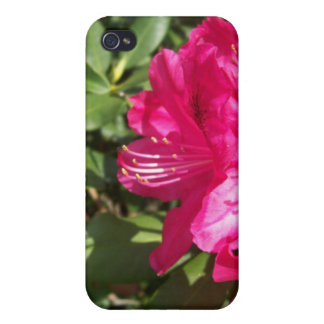 Pink Flowers iPhone 4 Cases