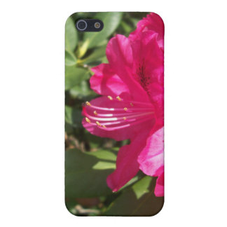 Pink Flowers iPhone 5 Cover
