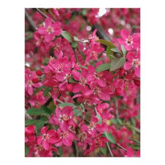 Pink flowers of apple letterhead