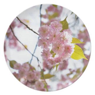 pink flowers of cherry melamine plate