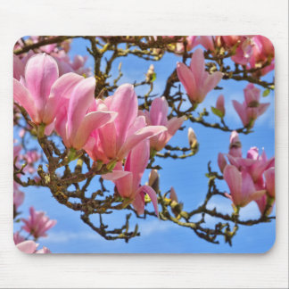 Pink flowers of magnolia mouse pad