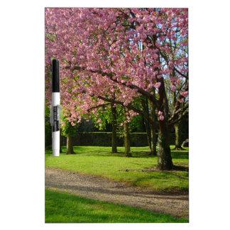 Pink flowers Of prunus in a park Dry-Erase Board