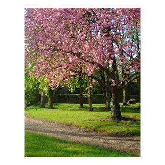 Pink flowers Of prunus in a park Letterhead Template