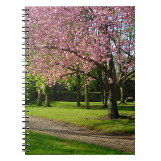 Pink flowers Of prunus in a park Spiral Note Book