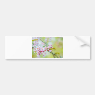Pink flowers on the bush. Shallow depth of field. Bumper Sticker