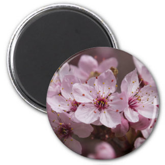 pink flowers on the tree magnet