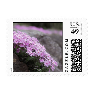 Pink Flowers (Phlox) Stamps