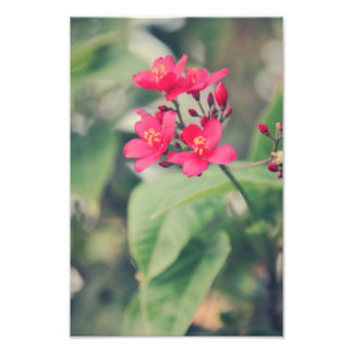 Pink flowers photographic print