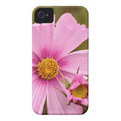 Pink Flowers phtographed by Tutti iPhone4 Case