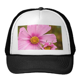 Pink Flowers phtographed by Tutti Mesh Hat