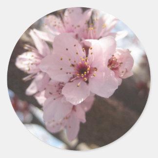 Pink Flowers - Plum Tree Classic Round Sticker