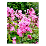 Pink Flowers Post Card