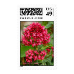 Pink Flowers Postage