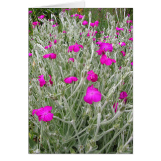Pink Flowers-Rose campion in an English Garden Card