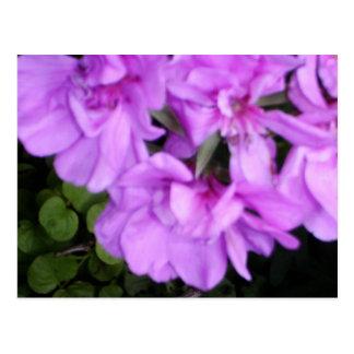 Pink Flowers Upclose Postcard