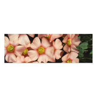 Pink Flowers Wood Sorrel, Oxalis Business Cards