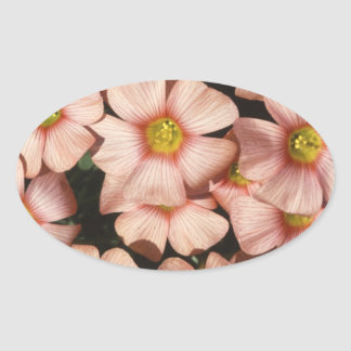 Pink Flowers Wood Sorrel, Oxalis Oval Sticker