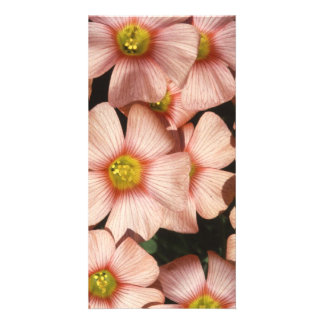 Pink Flowers Wood Sorrel, Oxalis Photo Card Template