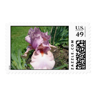 Pink for the Cure Postage