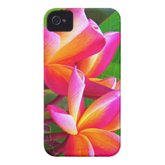 Pink Frangipani Flowers Blackberry Case