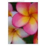 Pink Frangipani Plumeria Flowers Greeting Card