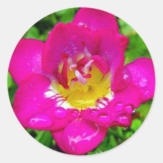 Pink Freesia Classic Round Sticker