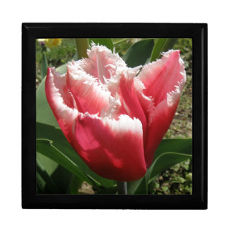 Pink Fringed Tulip Gift Box
