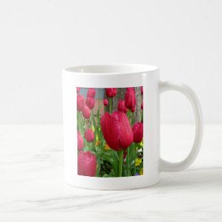 Pink Fringed Tulip Coffee Mugs