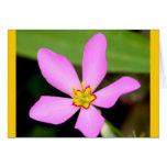 Pink Funky Flower Card