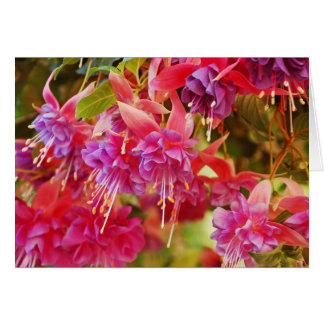 Pink fuschia flowers pring greeting card