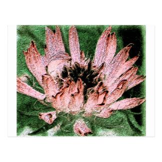 Pink gaillardia with black center on green postcard