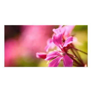 Pink garden flower card