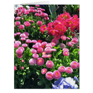 Pink Garden Mums Big Large Greeting Card