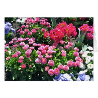 Pink Garden Mums Greeting Greeting Card
