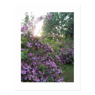 Pink Garden Postcard