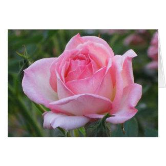 Pink Garden Rose 2 Card