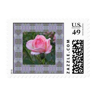 Pink Garden Rose ~ Border Stamp