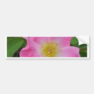 Pink Garden Rose - CricketDiane Flowers Bumper Sticker