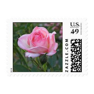 Pink Garden Rose Stamps