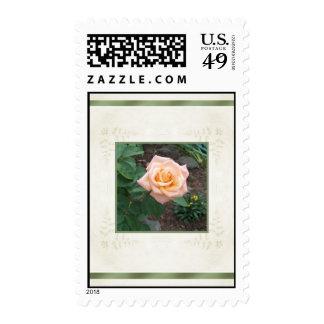 Pink Garden Rose Postage Stamp