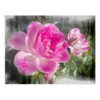 Pink Garden Rose Post Cards